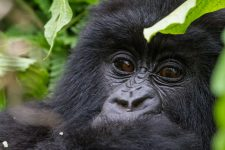 Rwanda Africa Revealed
