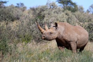 Rhino Safari Africa Revealed