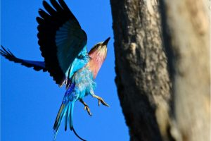 Bird Safari Africa Revealed