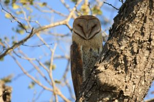 Owl Safari Africa Revealed